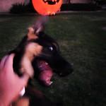 Look, a Pumpkin!